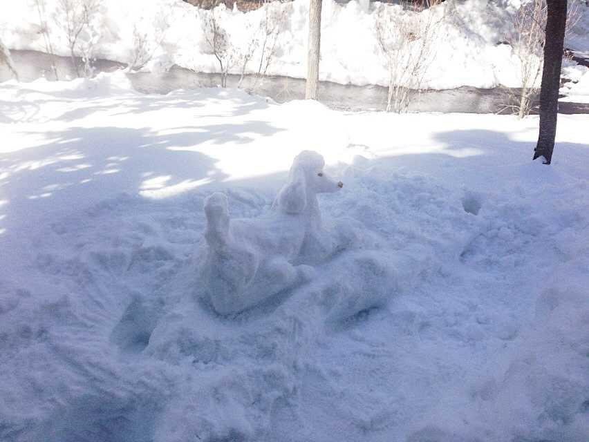 やはり作らずにはいられない♪雪スタンダードプードル_d0339885_13020802.jpg