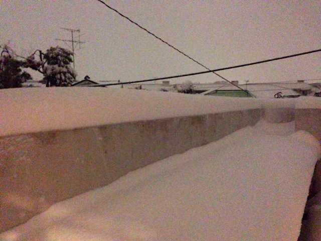 積雪27センチの朝:チワワの雪だるま_d0339885_13022920.jpg