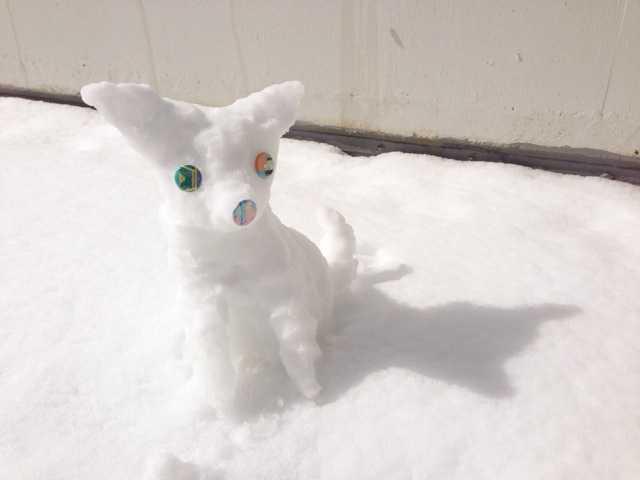 積雪27センチの朝:チワワの雪だるま_d0339885_13022931.jpg