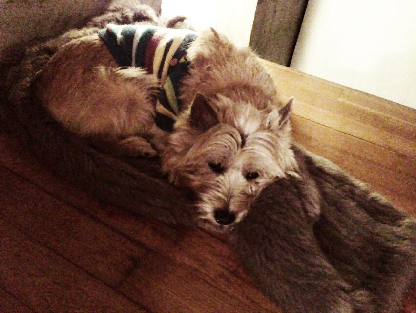 私のコートが犬の巣に!_d0339885_13031862.jpg