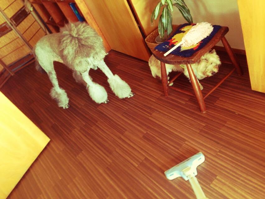 掃除機vs愛犬_d0339885_13033694.jpg