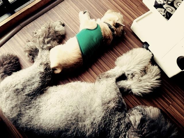 我が家の愛犬たち元気かなあ_d0339885_13035240.jpg