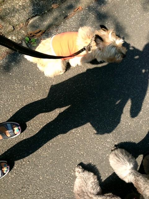 しばらくは涼しい散歩_d0339885_13052282.jpg