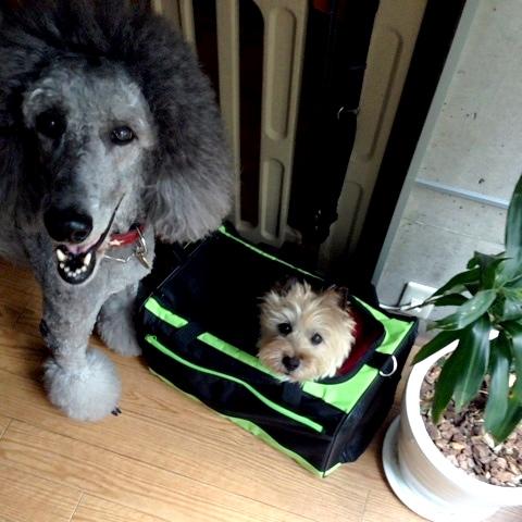 犬たち準備万端_d0339885_13054425.jpg