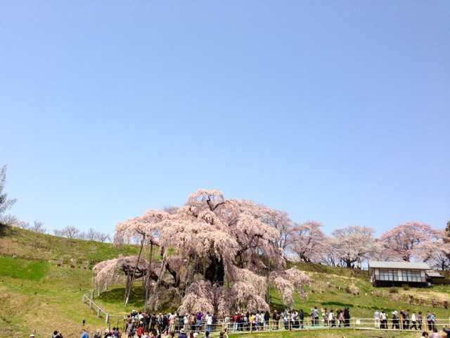 春の福島へ行ってきた(1):花見山・三春 滝桜で花見三昧♪_d0339885_13065511.jpg