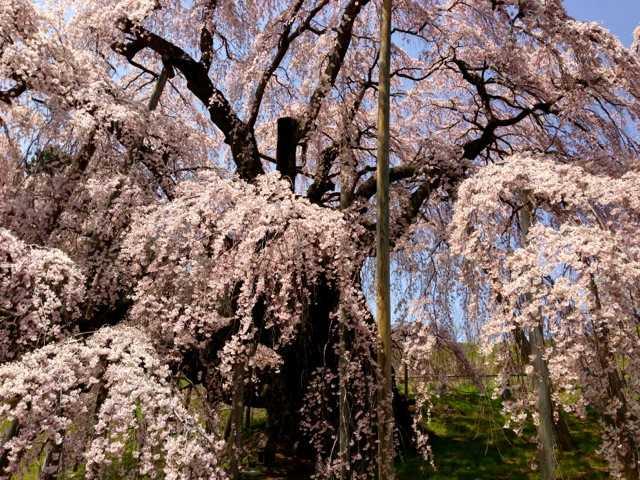 春の福島へ行ってきた(1):花見山・三春 滝桜で花見三昧♪_d0339885_13065547.jpg