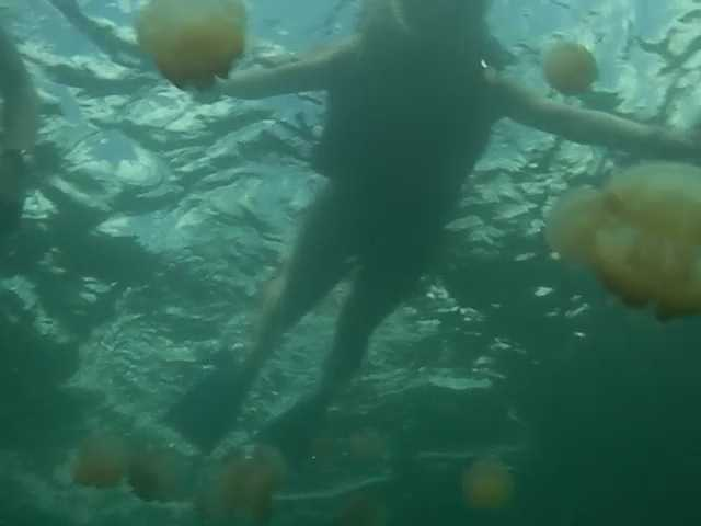 パラオでジェリーフィッシュと泳いだ!:ロックアイランドツアー_d0339885_13074759.jpg