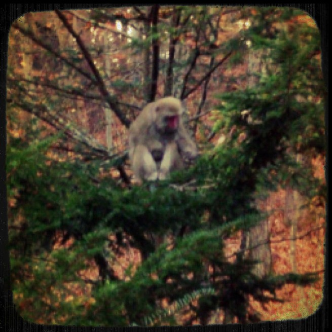 庭に猿の軍団があ(-。-;_d0339885_13454458.jpg