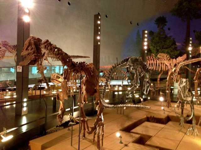 大人も十分楽しいジュラシックパークの世界:福井県立恐竜博物館_d0339885_13461081.jpg