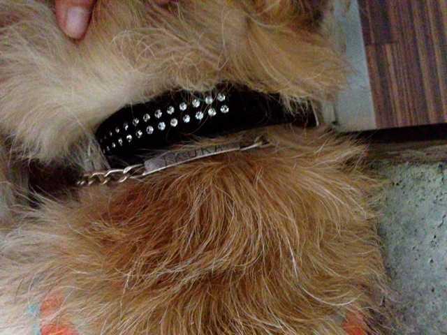 我が家の犬たちの新しい首輪:ドイツのHUNTER(ハンター)_d0339885_13461514.jpg
