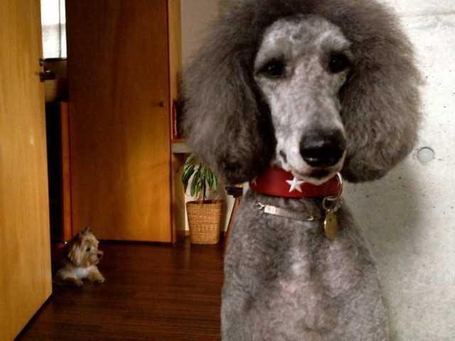 我が家の犬たちの新しい首輪:ドイツのHUNTER(ハンター)_d0339885_13461547.jpg