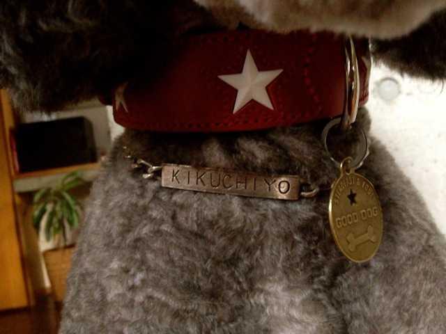我が家の犬たちの新しい首輪:ドイツのHUNTER(ハンター)_d0339885_13461563.jpg
