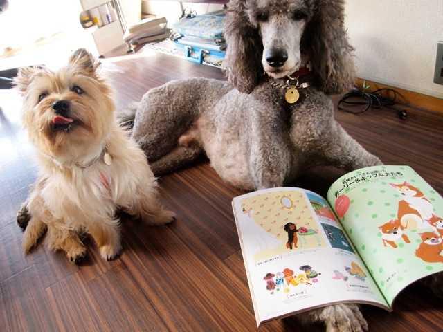 クレアドッグに私の描いた犬がいっぱい_d0339885_13491136.jpg