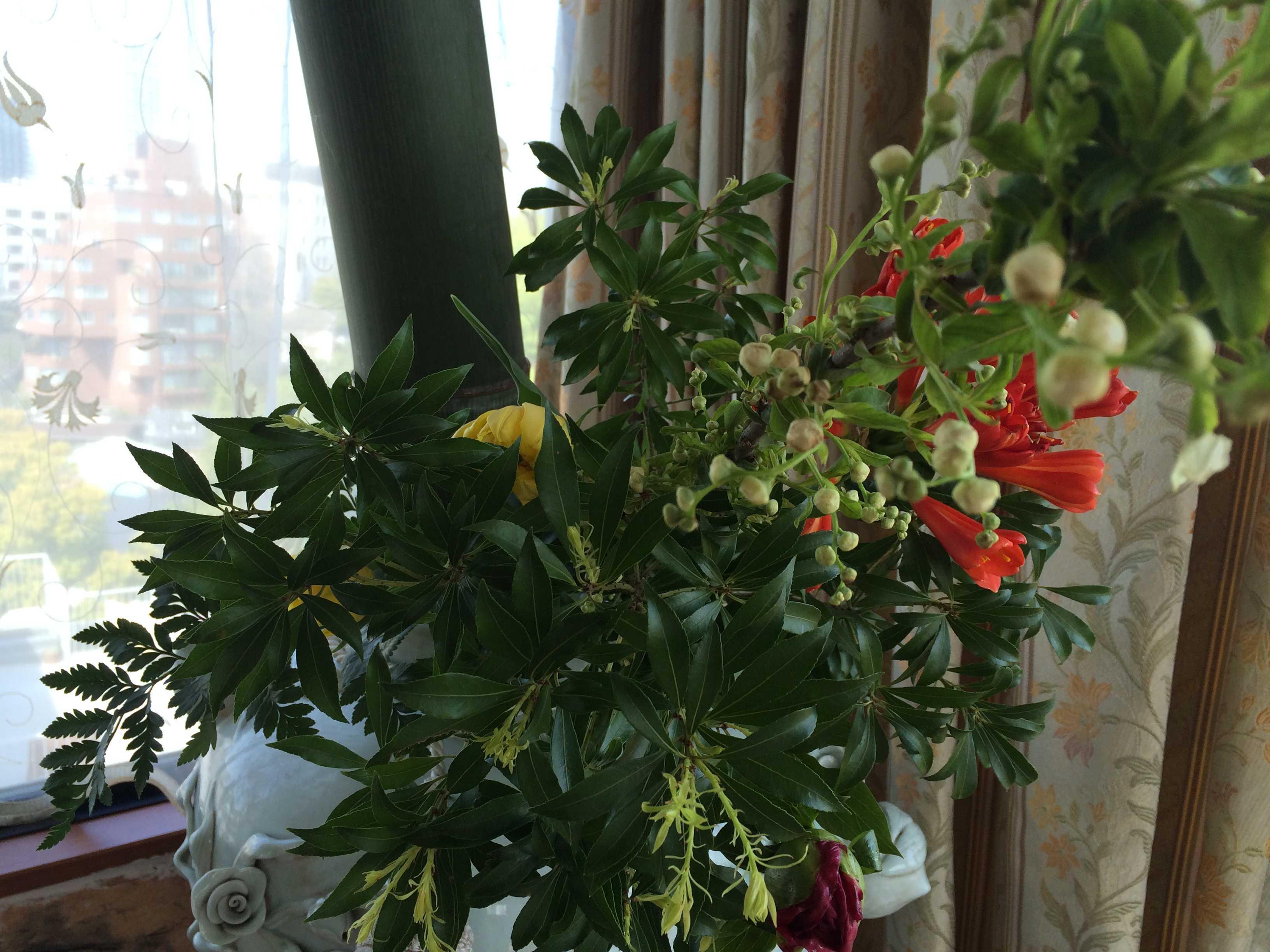 春爛漫_d0339890_12195678.jpg