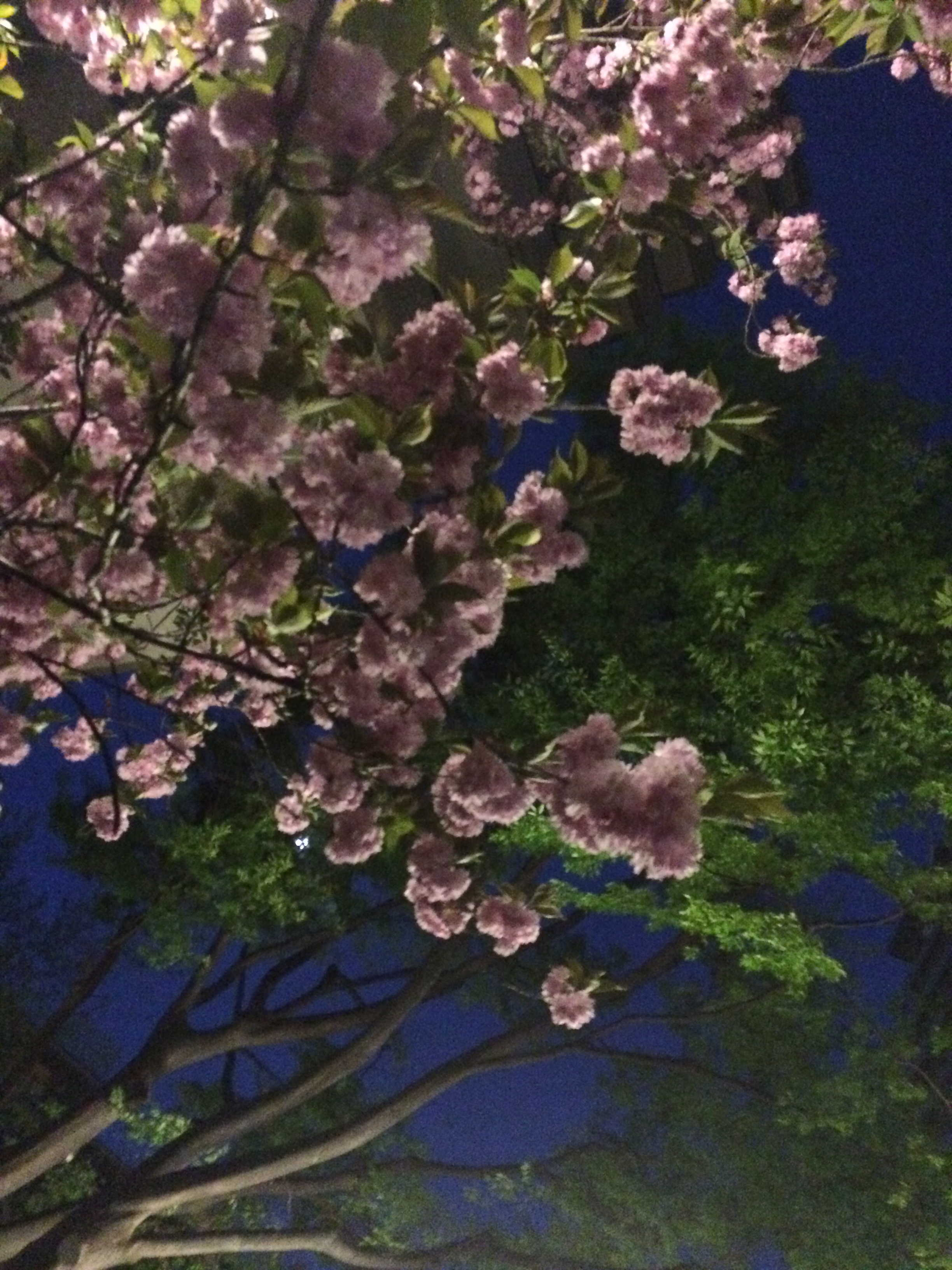 春爛漫_d0339890_12195756.jpg