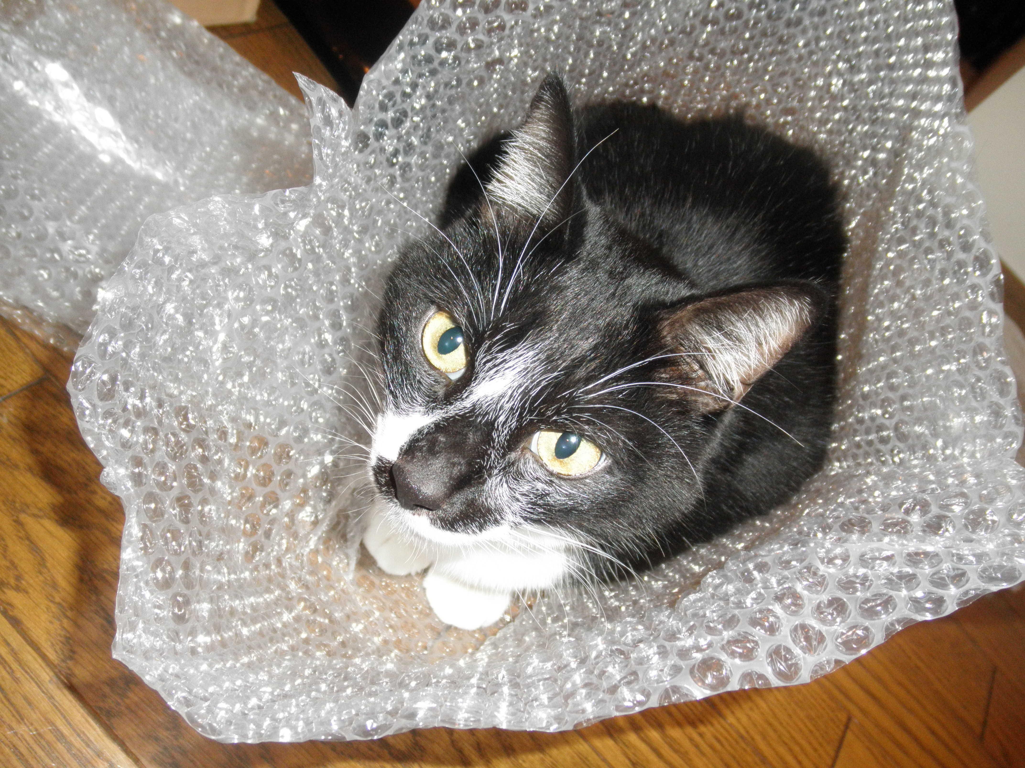 ネコの手も借りたい年末_d0339890_12253809.jpg