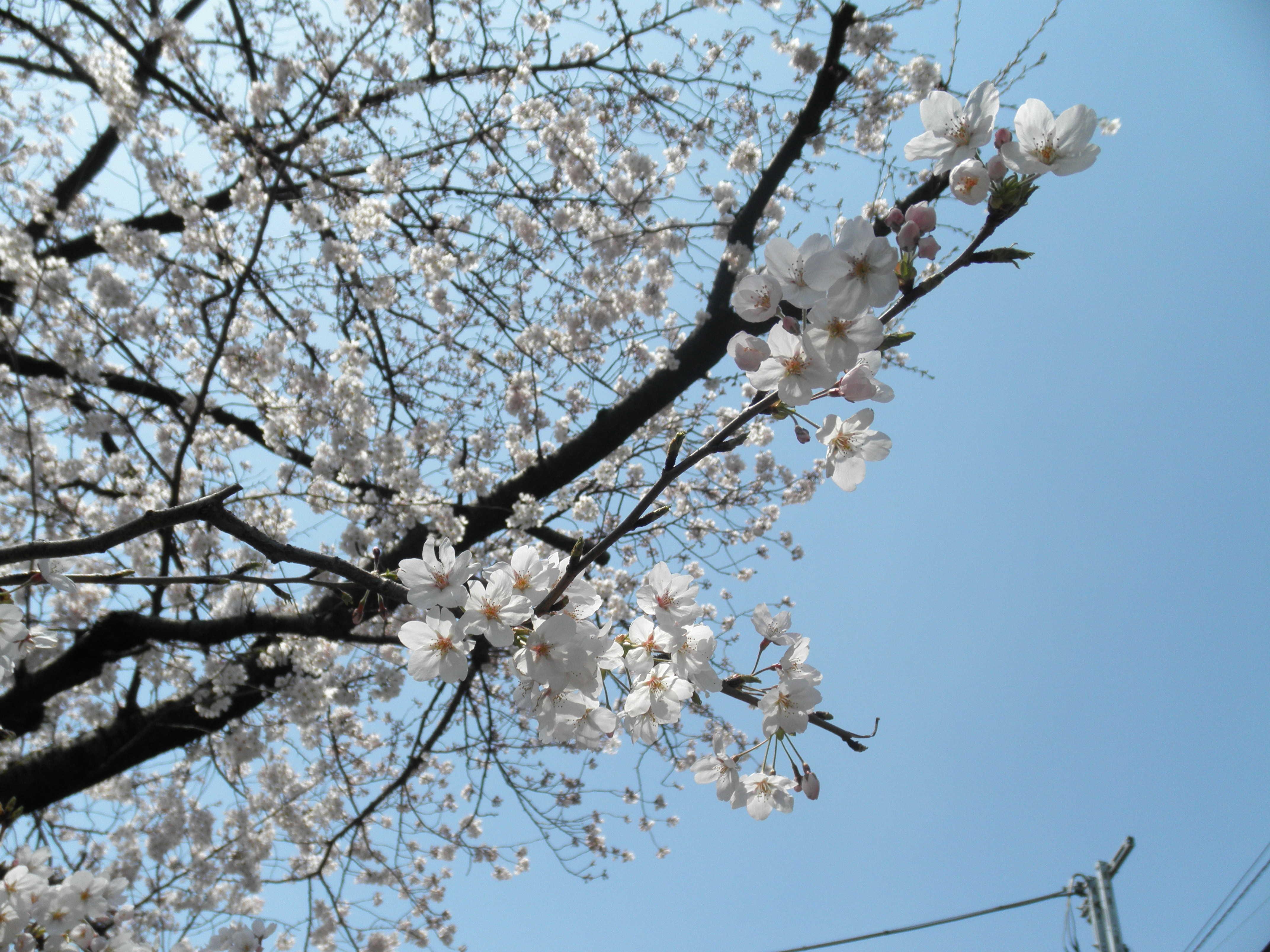 やっと春♪_d0339890_12303279.jpg