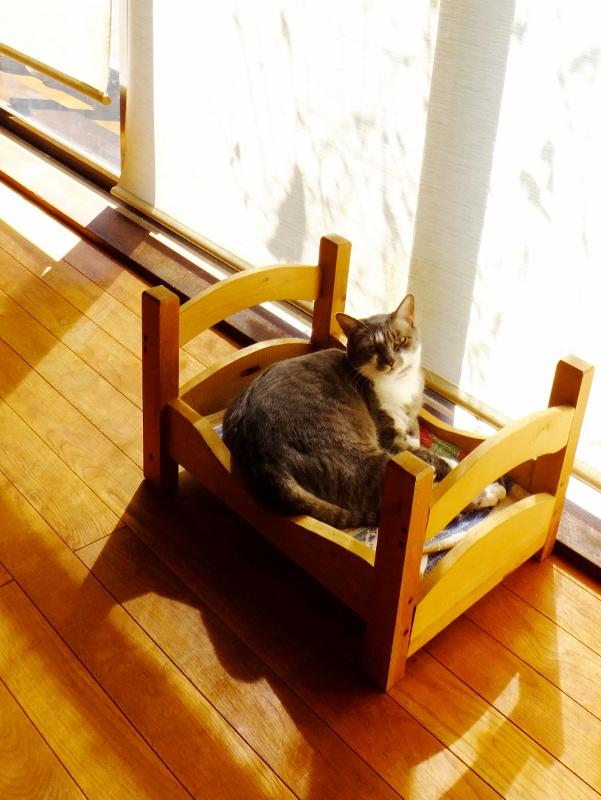 猫の問題は人の問題_c0115596_22501390.jpg