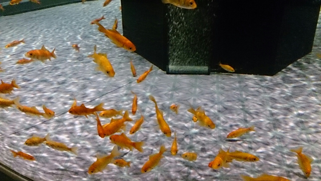 すみだ水族館の金魚。_b0298605_16480852.jpg