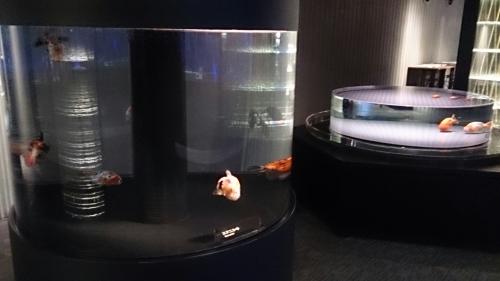 すみだ水族館の金魚。_b0298605_16482857.jpg