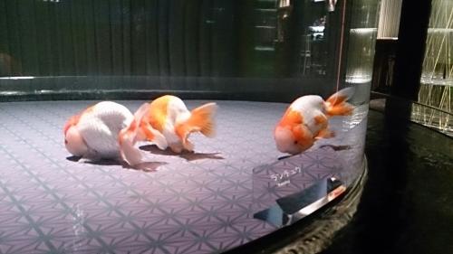 すみだ水族館の金魚。_b0298605_16483370.jpg