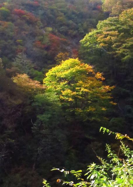 湯沢市・三本槍山トンネル~サプライズ_a0214206_13220773.jpg
