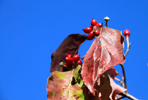 紅葉が始まっている1_e0048413_2052827.jpg