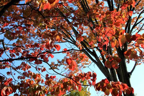 紅葉が始まっている1_e0048413_206410.jpg