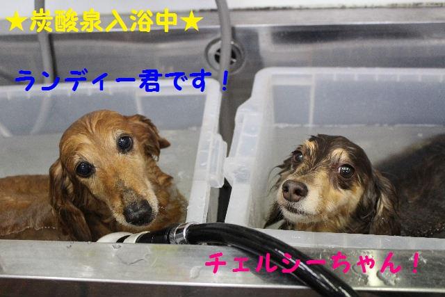 物欲!!_b0130018_19291847.jpg