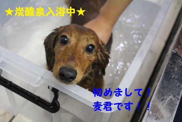 物欲!!_b0130018_19322438.jpg