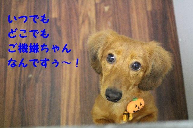 物欲!!_b0130018_19331079.jpg