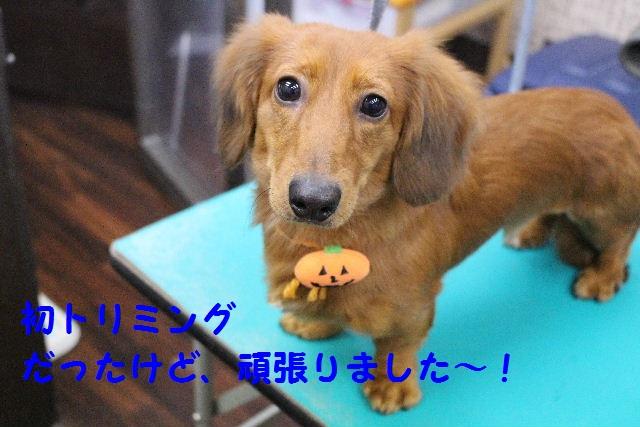 物欲!!_b0130018_1933260.jpg