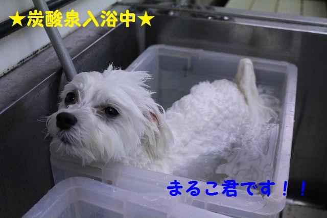 物欲!!_b0130018_19344032.jpg