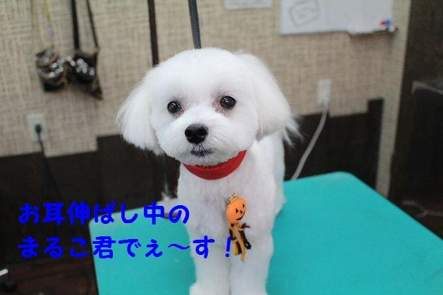 物欲!!_b0130018_1935226.jpg