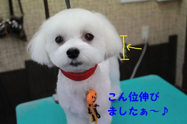 物欲!!_b0130018_1935282.jpg