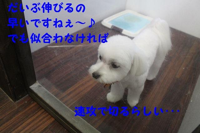 物欲!!_b0130018_1935371.jpg