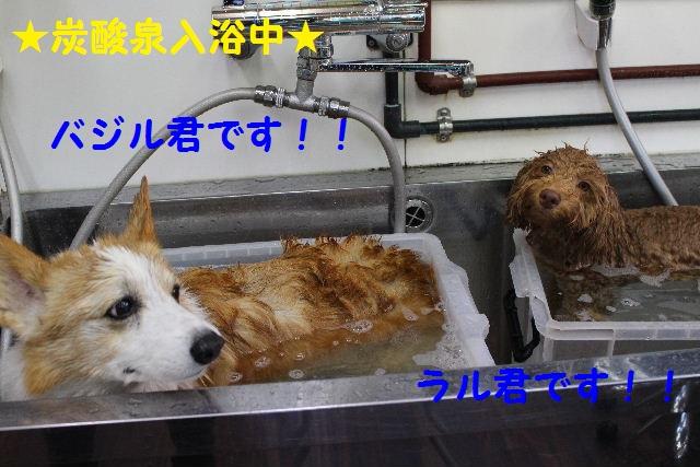 物欲!!_b0130018_19361765.jpg