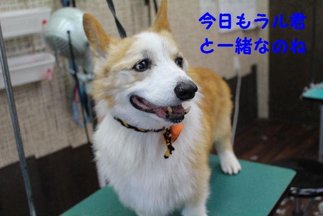 物欲!!_b0130018_19371293.jpg