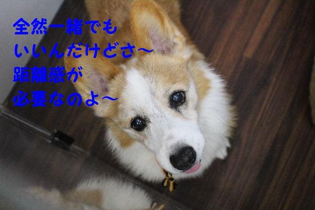物欲!!_b0130018_19374265.jpg