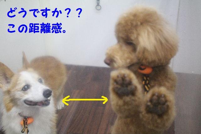 物欲!!_b0130018_1938487.jpg