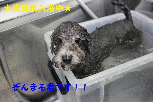 物欲!!_b0130018_19393168.jpg
