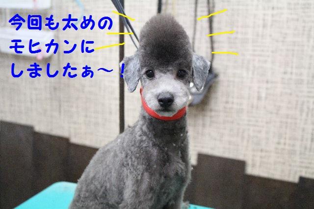 物欲!!_b0130018_19401171.jpg