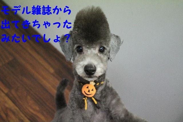 物欲!!_b0130018_19401984.jpg