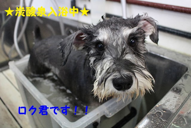 物欲!!_b0130018_19412323.jpg