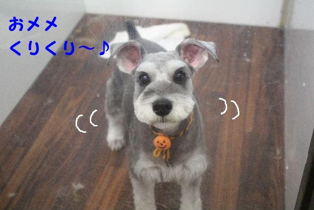 物欲!!_b0130018_19422055.jpg