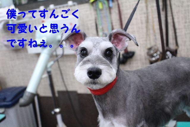 物欲!!_b0130018_1942328.jpg