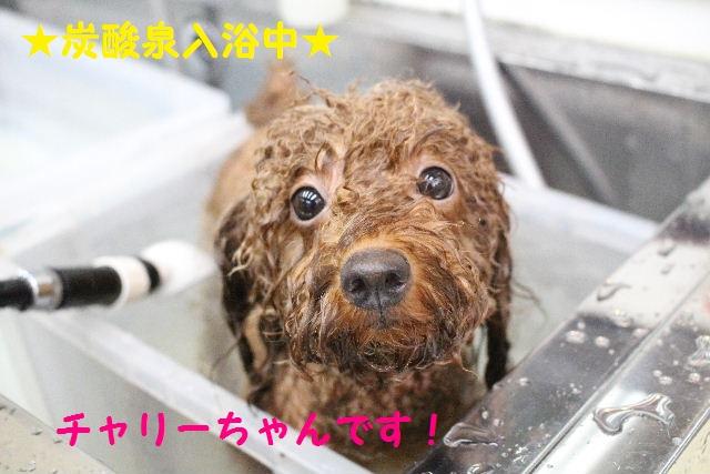 物欲!!_b0130018_19425811.jpg