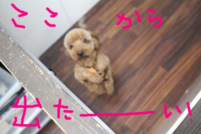 物欲!!_b0130018_19433731.jpg