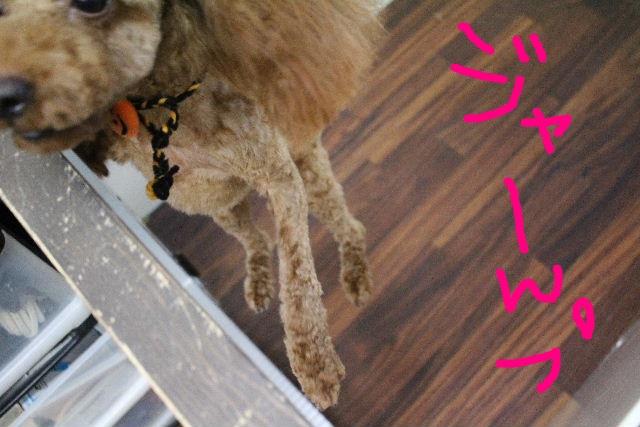 物欲!!_b0130018_19434629.jpg