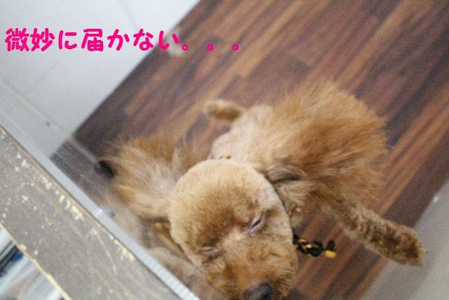 物欲!!_b0130018_194356100.jpg